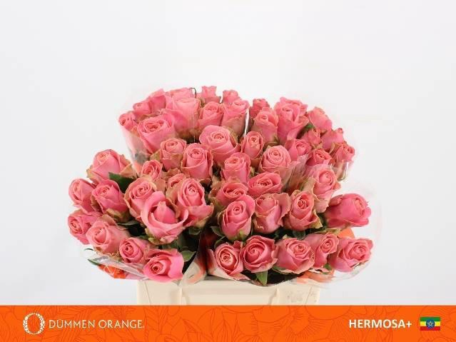 <h4>R GR HERMOSA+</h4>