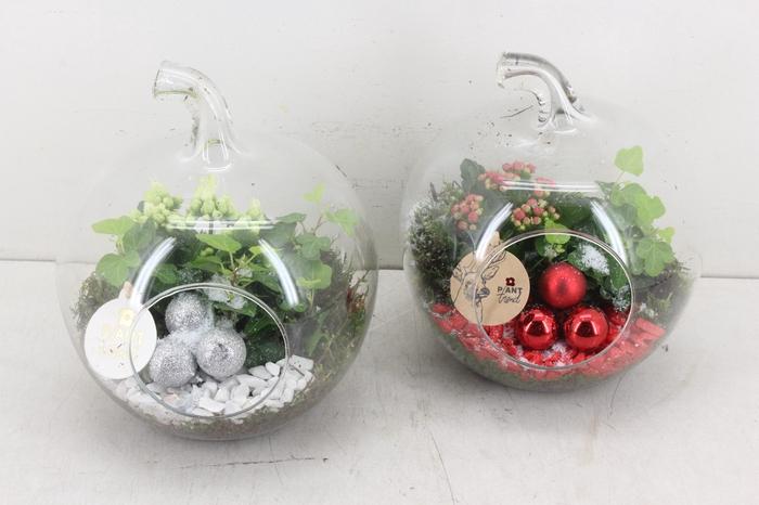 <h4>arr. PL - Glas appel - rood/wit</h4>