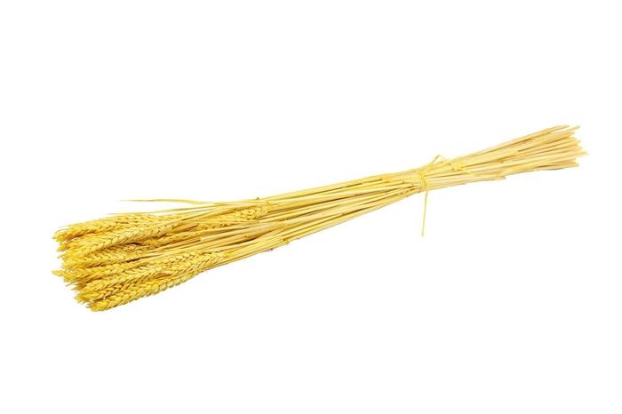 <h4>Pres Triticum ( Tarwe ) Yellow</h4>