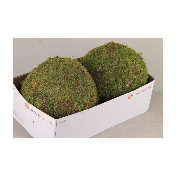 <h4>Ball Moss Green 30cm</h4>