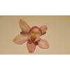 Cymbidium 12/15 Light Pink Bl pst