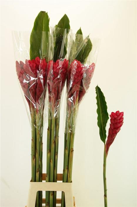 Alpinea Red L