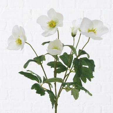 <h4>Zijde, Helleborus, H 38 cm, 1 ass, White</h4>