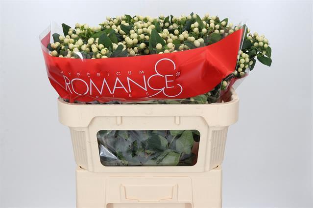 <h4>HYP COOL ROMANCE</h4>
