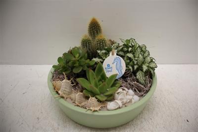 <h4>8528 Ker. Kon. Groen Cactus</h4>
