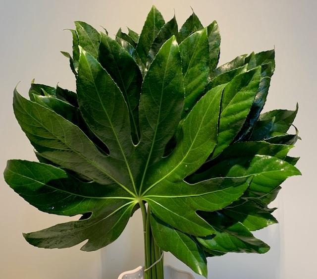 <h4>Greens - Aralia Leaves</h4>