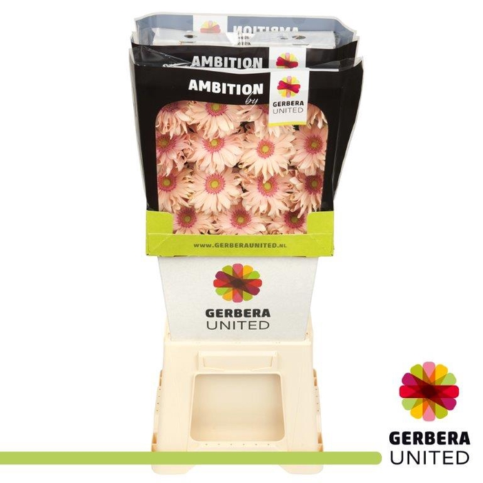 <h4>Gerbers Pasta Rosatsa</h4>