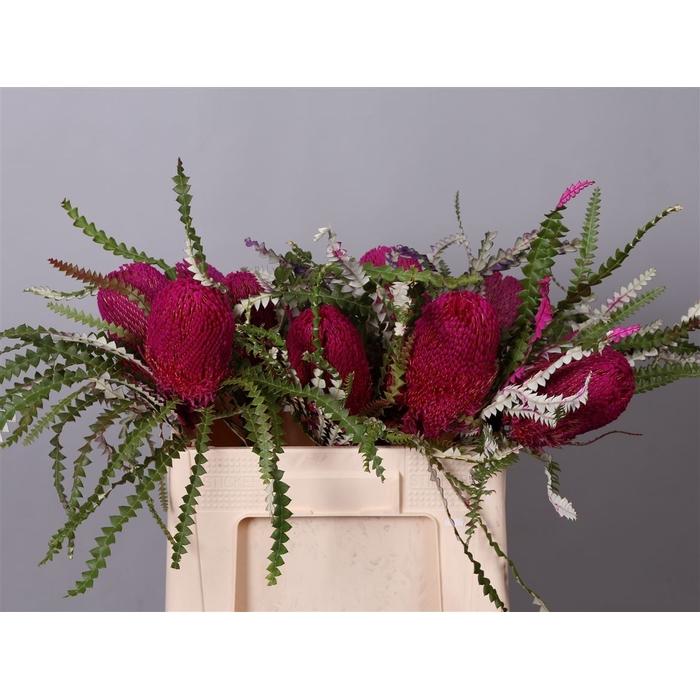 <h4>Banksia Prionotes Pink</h4>