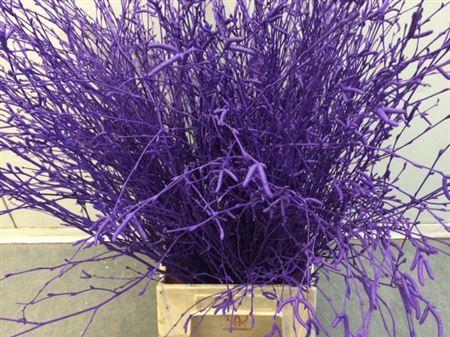 <h4>Berkentak Purple 70cm</h4>