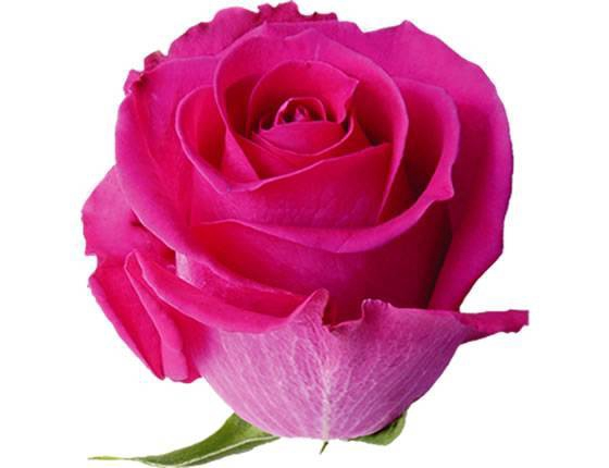 <h4>ROSA PINK ESCURA TOPAZ 060 IMPORTADA</h4>