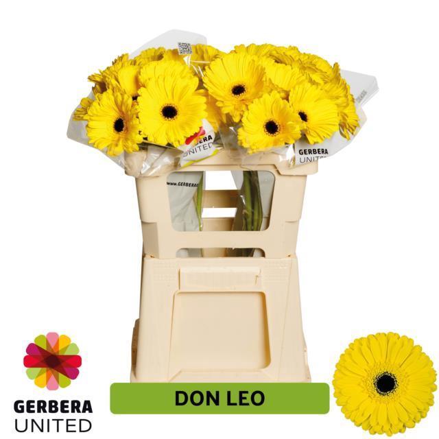 <h4>GE GR Don Leo water</h4>