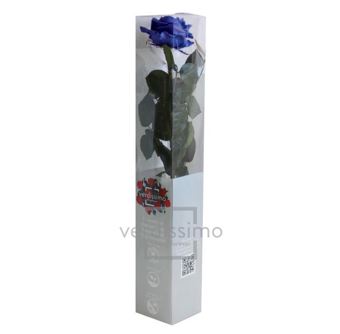 Roos op steel  xl Plexi 55cm Dark blue