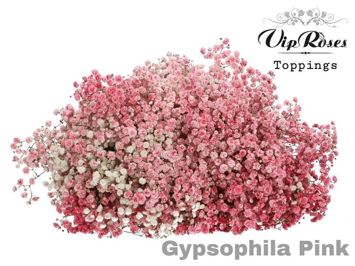 GYPS PA PINK