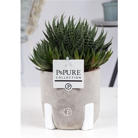 <h4>Aloe Aristata Keramiek Jade</h4>