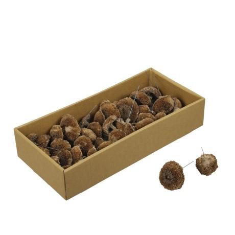 <h4>Droogvrucht Mushroom/draad 10cm x40</h4>