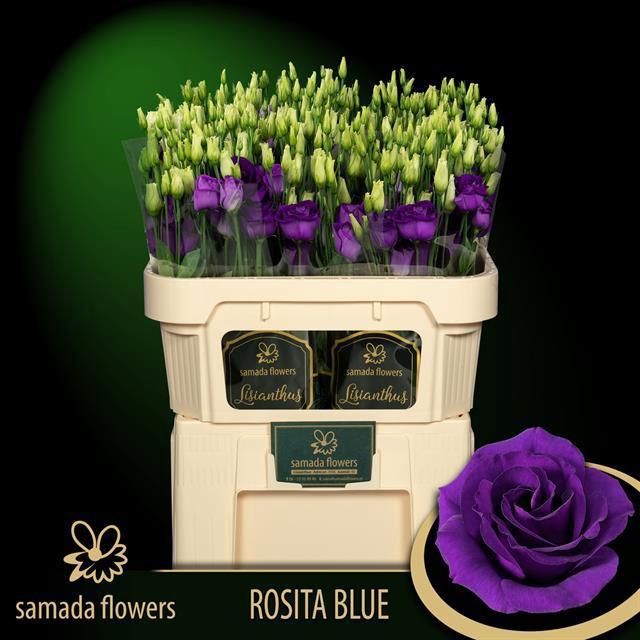 <h4>EUS G ROSI BLUE</h4>