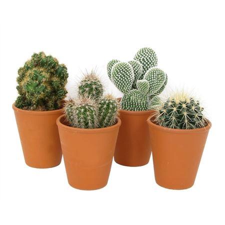 <h4>Cactus Roodsteen Vaas 9 Cm</h4>