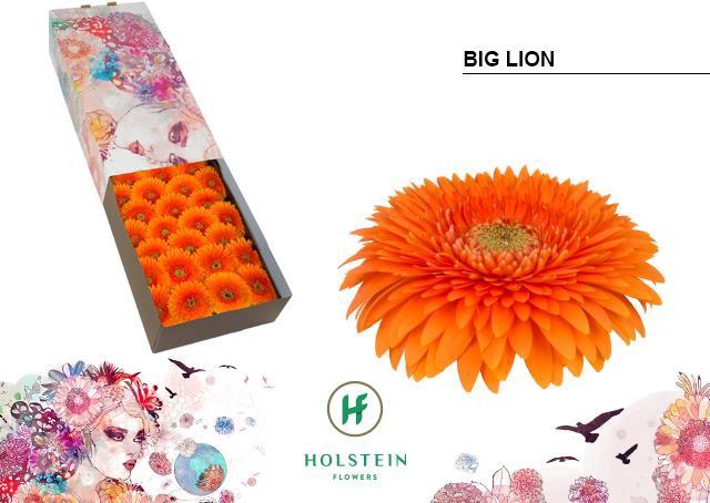 <h4>GE GB GERP BIG LION</h4>