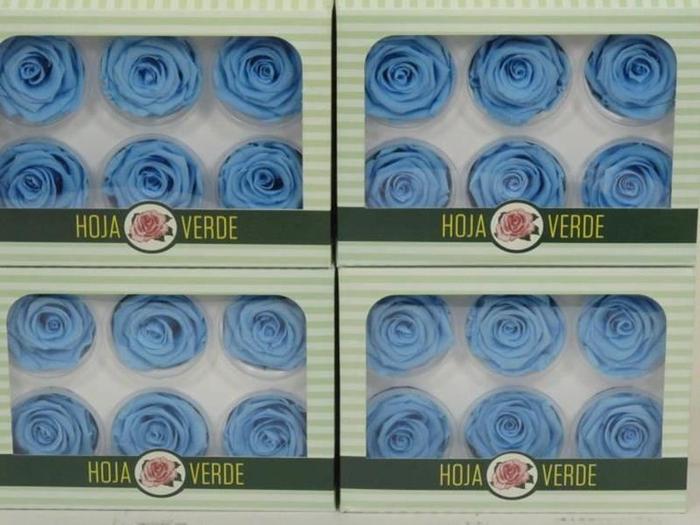 <h4>Preserved Roses Light Blue</h4>