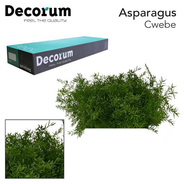 <h4>ASP cwebe 50cm box dc</h4>