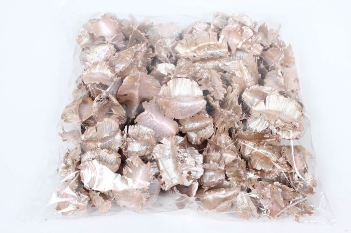 <h4>Arjun large 250gr in poly Pearl Pink</h4>