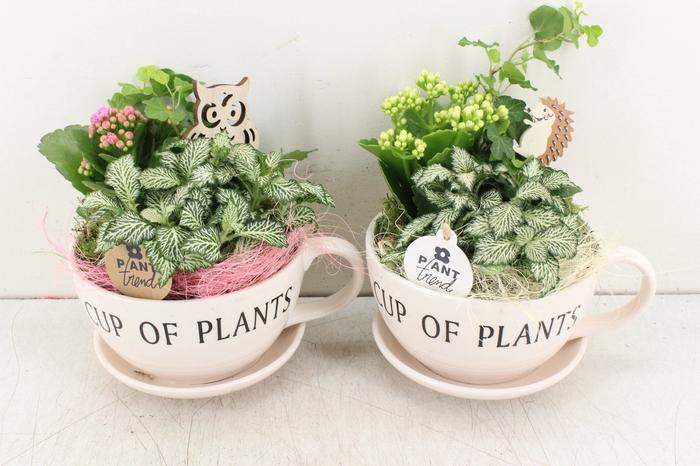 arr. PL - Cup of plants - roze/wit