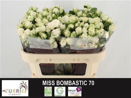 <h4>R TR MISS BOMBASTIC</h4>