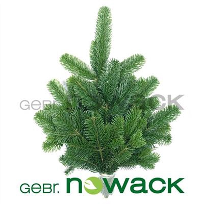 <h4>ABIES NORDMANN BS</h4>