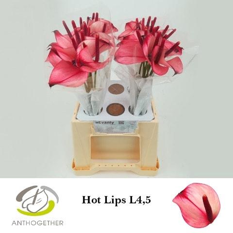 <h4>ANTH PR AMA HOT LIPS 40 L4,5.</h4>