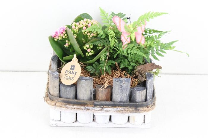 <h4>arr. PL - Hout 4kant grijs/wit - roze</h4>