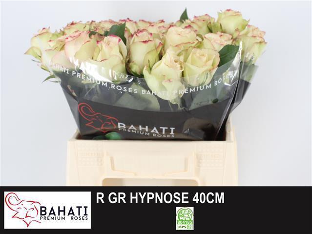 <h4>R GR HYPNOSE@</h4>