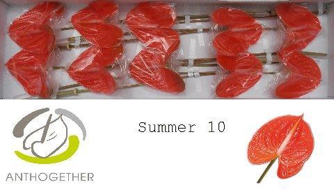 <h4>ANTH A SUMMER</h4>