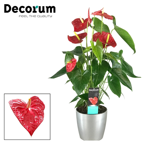 <h4>Anthurium Dakota pot 17 keramiek zilver</h4>