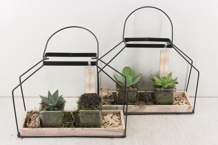 <h4>arr. MB - Metaal frame huis succulent</h4>