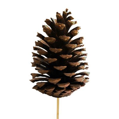<h4>Pique Cône du pin 10-12cm+bâton 50cm naturel</h4>