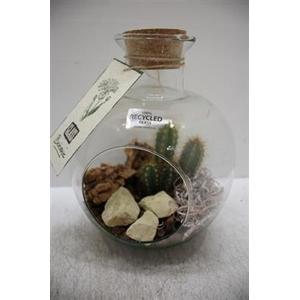 6045 Bolfles+ Kurk Cactus