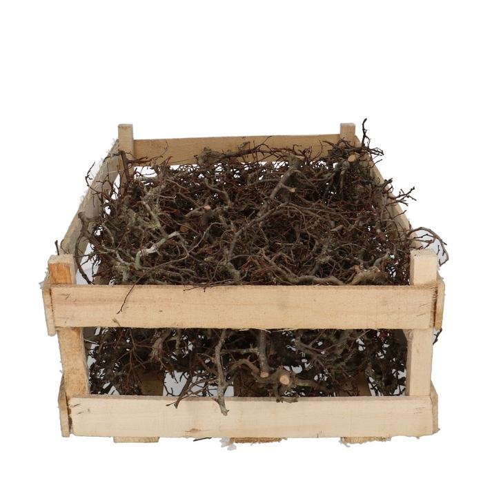 <h4>Dried articles Bonsai branches</h4>
