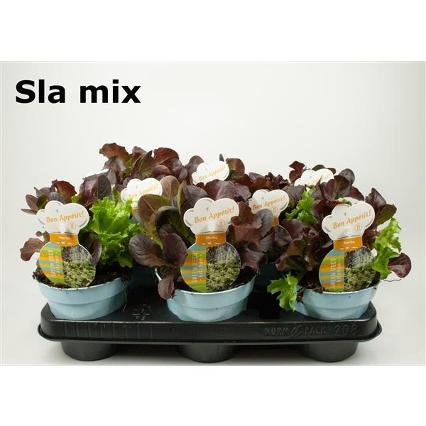 <h4>Sla mix 12cm</h4>