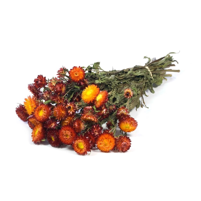 <h4>DRIED FLOWERS - HELICHRYSUM NATURAL RED</h4>
