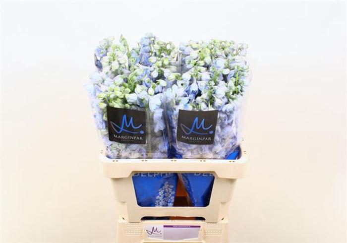 <h4>Delphinium Elatum Guardian Lavender</h4>