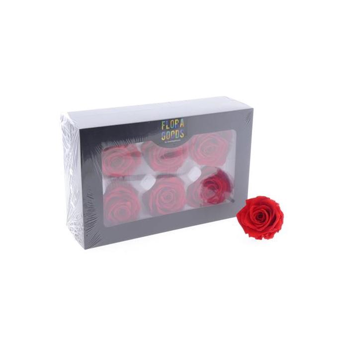 <h4>Pf Rose 6cm Red</h4>