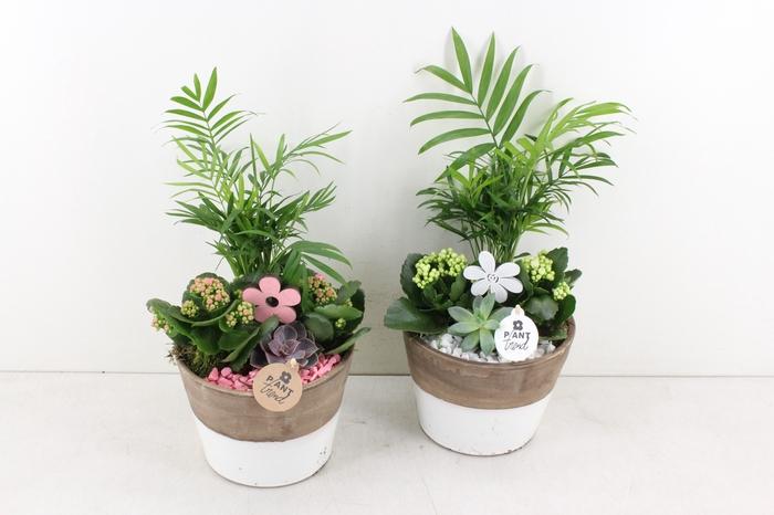 <h4>arr. PL - Ker. pot duo colour - roze/wit</h4>