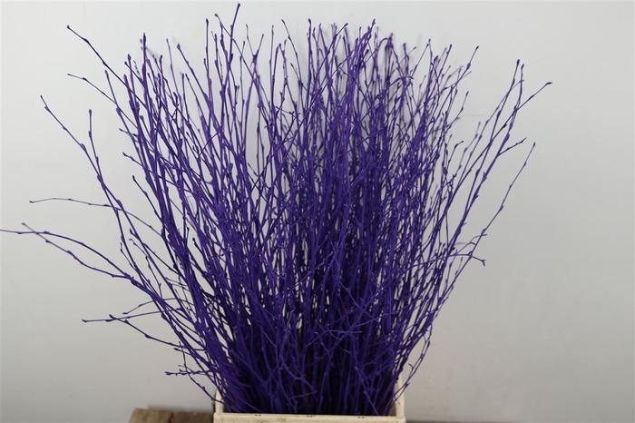 <h4>Berk Kort Purple Pbs</h4>