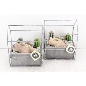 arr. JS - Metaal huisje cactus