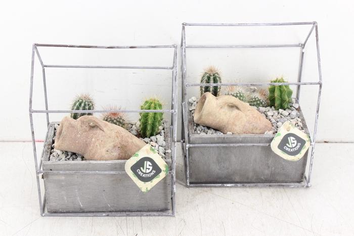 <h4>arr. JS - Metaal huisje cactus</h4>