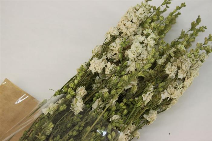 <h4>Dried Delphinium White</h4>