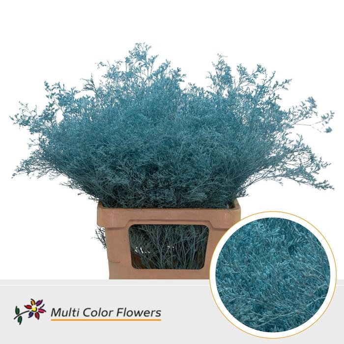 <h4>Limonium Beltaard Blue Ice</h4>
