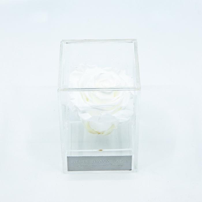 Plexi 7cm witte roos