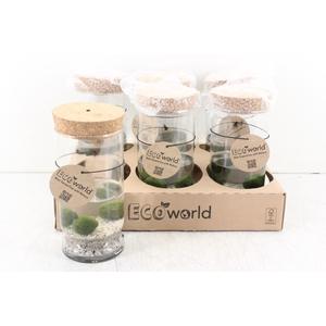 arr. EW - Glas cilinder waterpl. LED