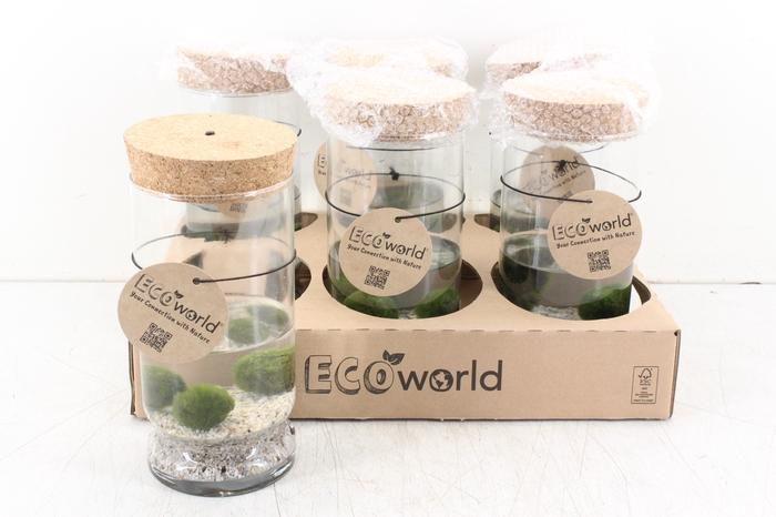 <h4>arr. EW - Glas cilinder waterpl. LED</h4>